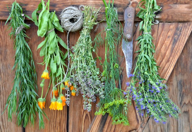 The Foragers Bible [How To Store Edible Wild Plants]