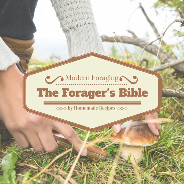 Guide To Foraging For Food | Homemade Recipes http://homemaderecipes.com/healthy/the-foragers-bible-best-places-to-find-wild-edibles
